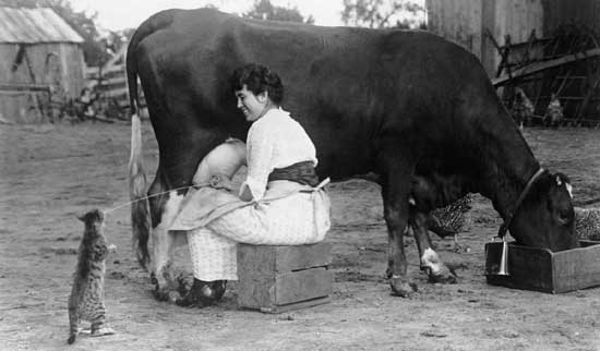 Milk cow, milkmaid and cat