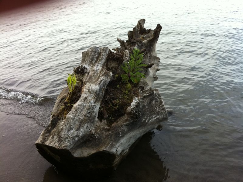 Blooming driftwood