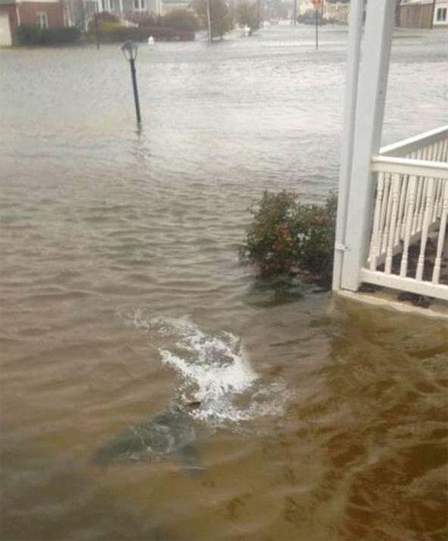 Shark in the front yard