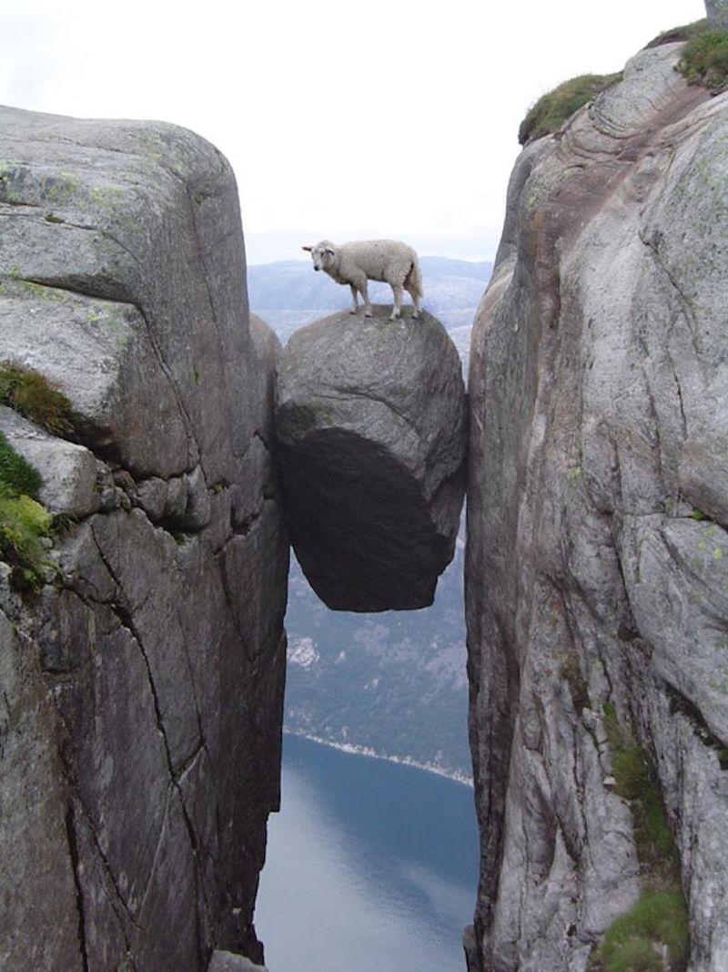 Sheep on rock