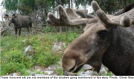 Stockholm elk