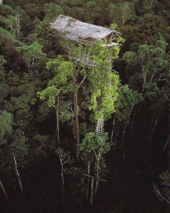 Tree houses of the Korowai Tribe of New Guinea