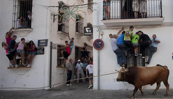 Not quite running with the bulls