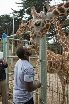 Niners' Patrick Willis is kissed by a giraffe