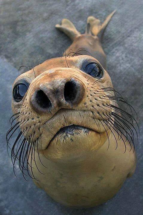 A seal sticks its nose in your business