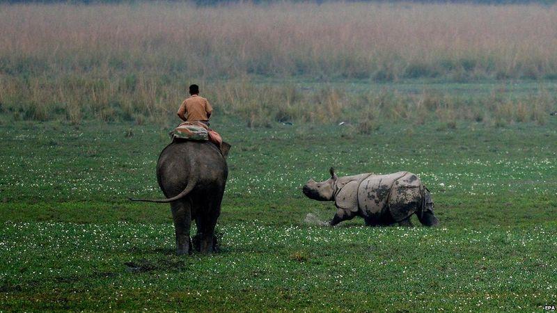 Pobitora Wildlife Sanctuary, India