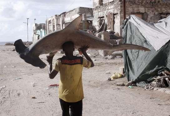 Somali fisherman with a hammerhead shark