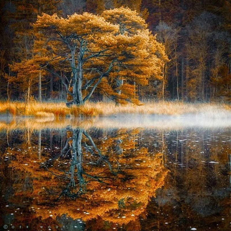 Tree by lake