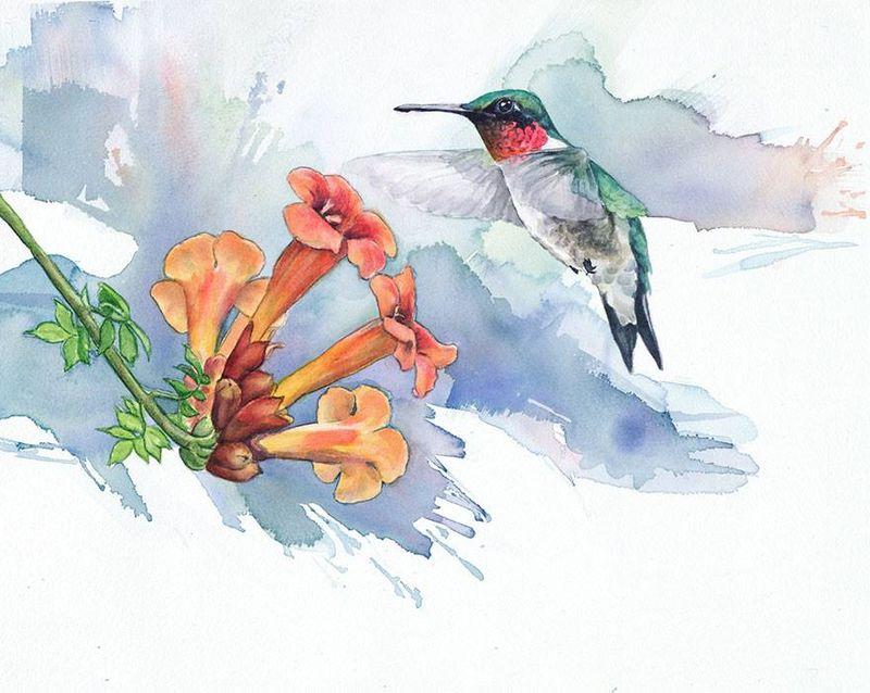 Hummingbird, Anne Balogh