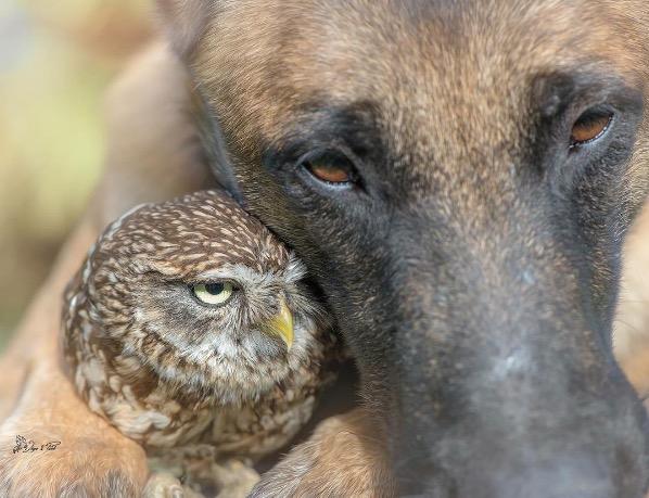 Owl and dog 4
