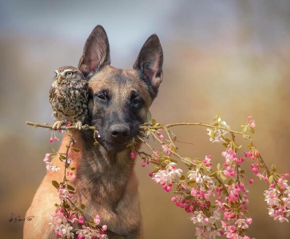Owl and dog 6