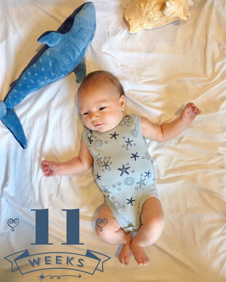 11 weeks and whale