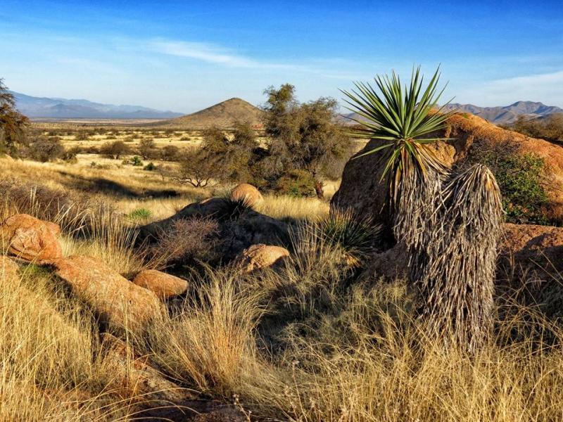 Midmorning  The Dragoon Mountains  Cochise County  Arizona