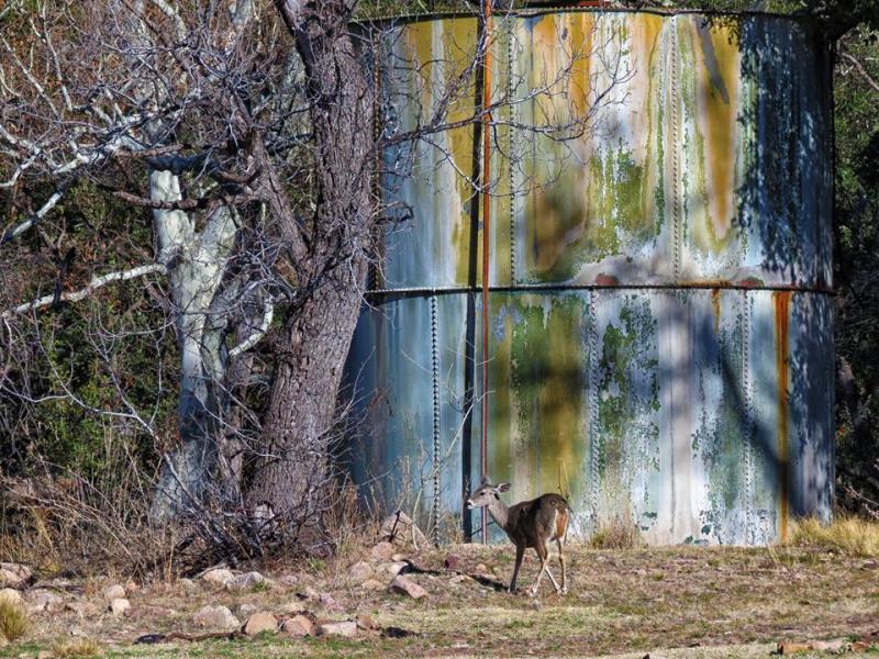 Deer Tank At Sunny View  Cochise County  Arizona