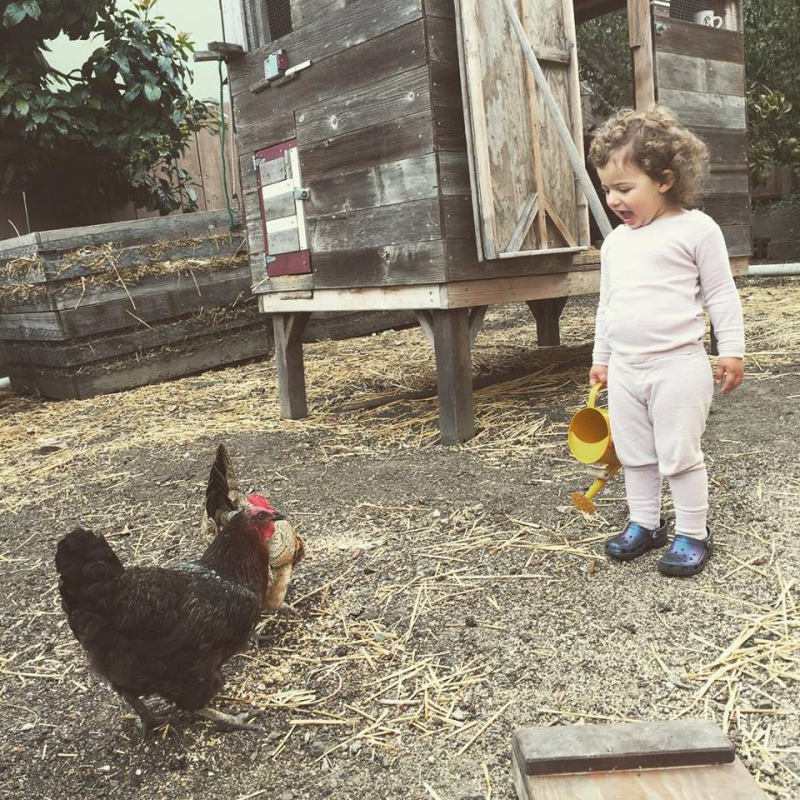 From awhile back  laughing at chickens