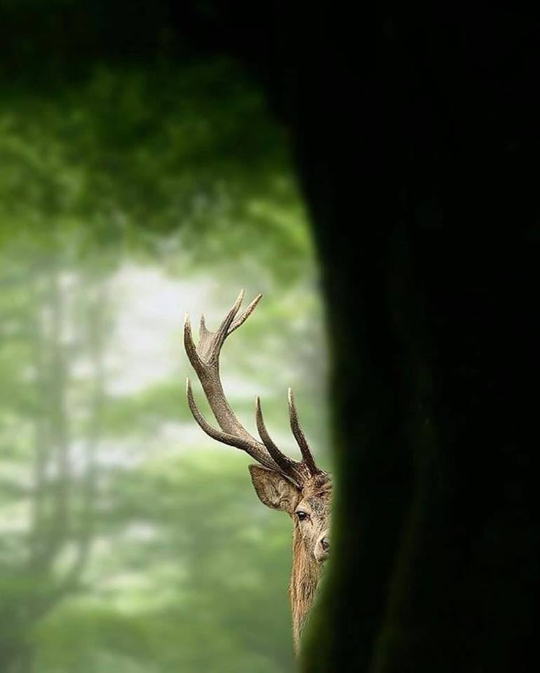 Antlers make it hard to hide