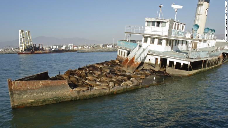 Sea lions convert wrecked ship to a place to sun  Ensenada Harbor