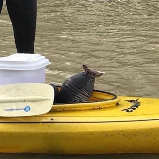 Rescue in Houston