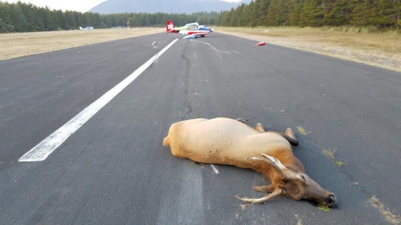Elk destroys plane