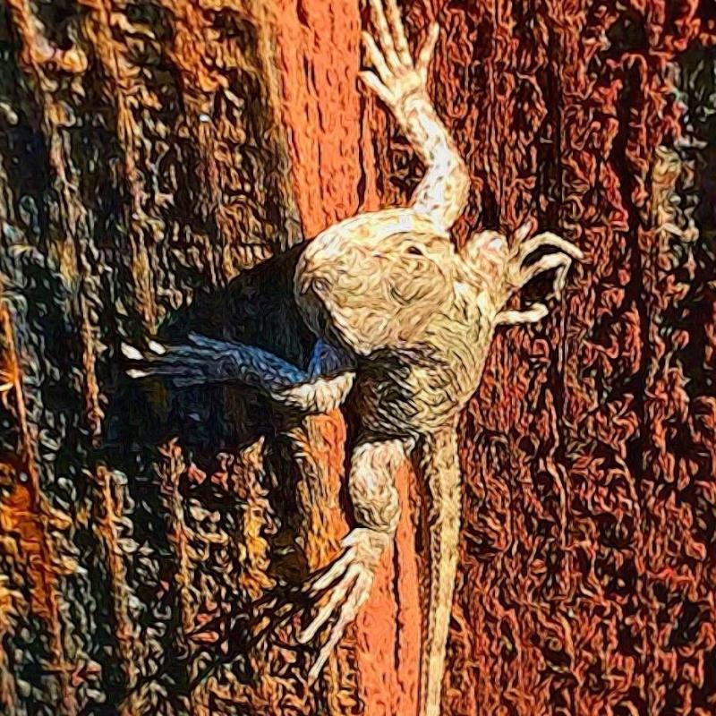 Frog on a redwood