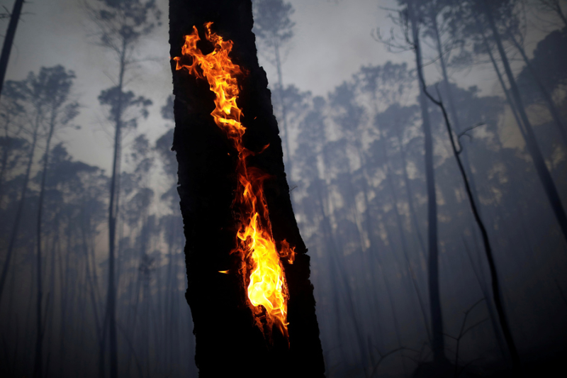 Forest fire  Brazil