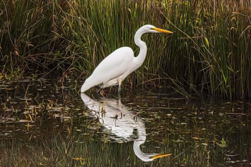 Egretat Delta Ponds  Eugene OR