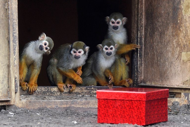 Squirrel monkeys in Budapest zoo