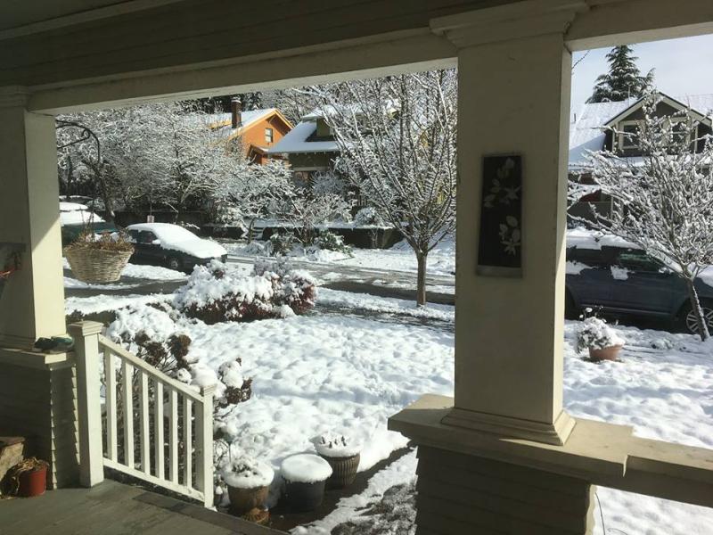 Backyard in snow