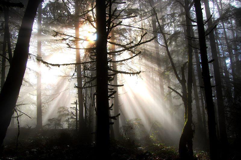 Fog in Oregon