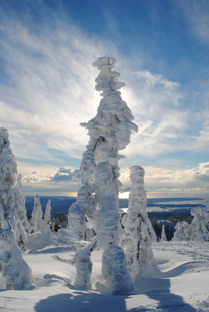 Ghost Tree Forest Mt. Seymour, British Columbia