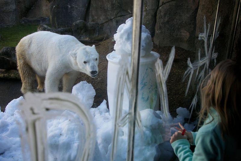 International Polar Bear Day at Portland Zoo 1