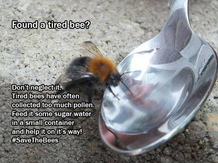 For tired bees