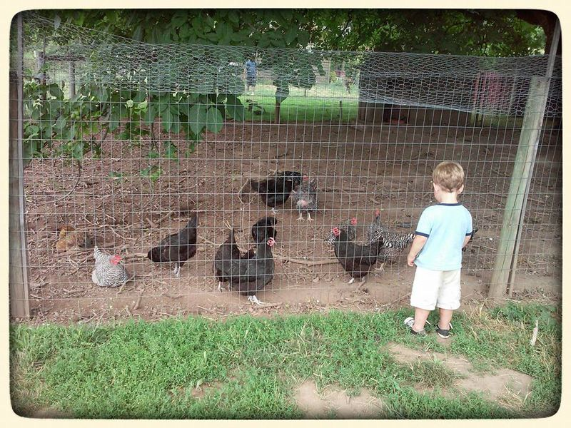 Hanging out with chickens