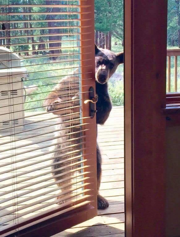 Hello, neighbor.