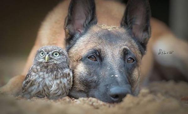 Owl and dog 1