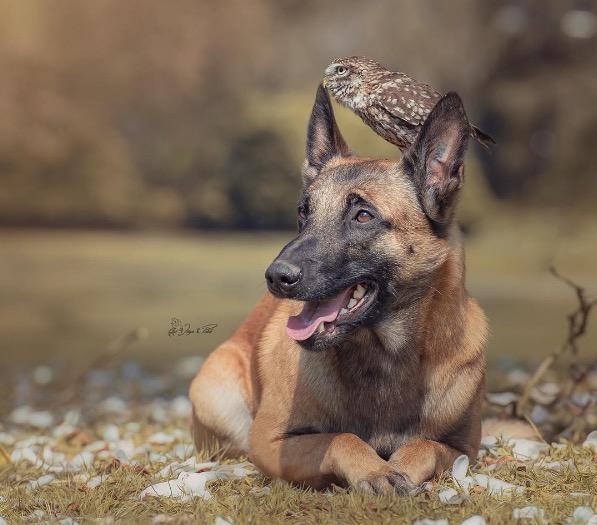 Owl and dog 5