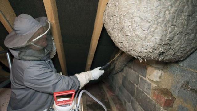 3.2 foot round wasp nest