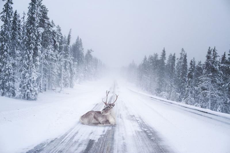 Nature's roadblock