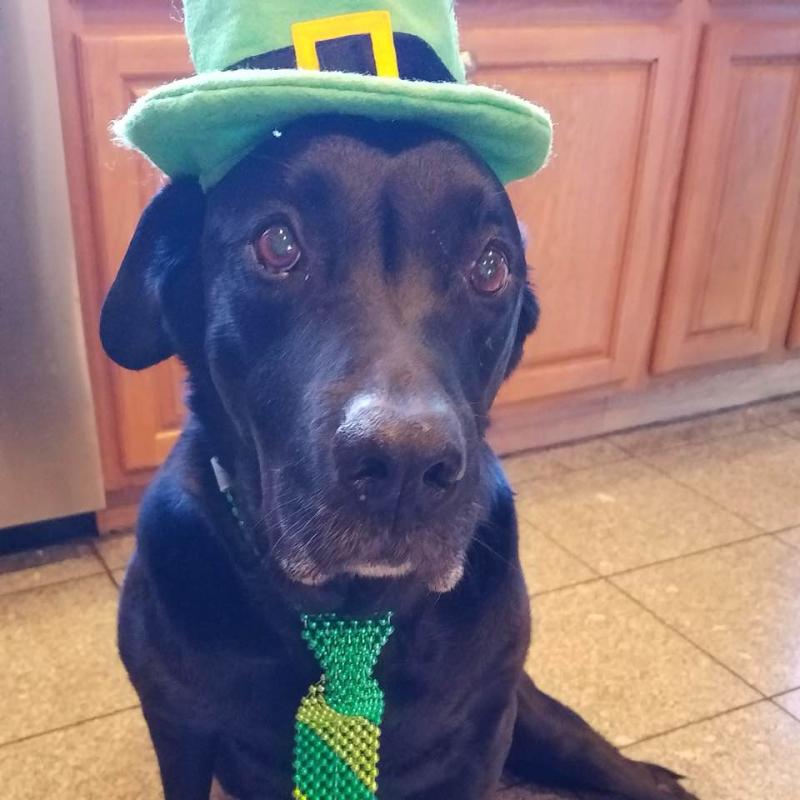 Buddy likes St. Patrick's Day