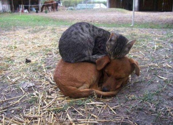 Cat on dog 1