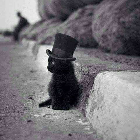 Kitten with top hat