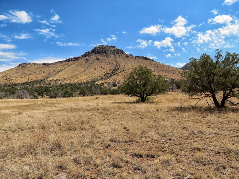 West Slope  Chircahua Mountains  AR