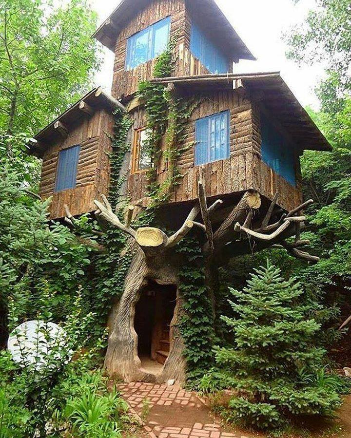 Duplex tree house
