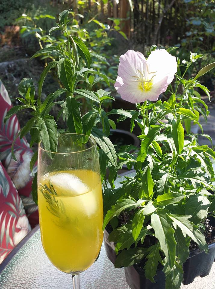 Beautiful flower with drink