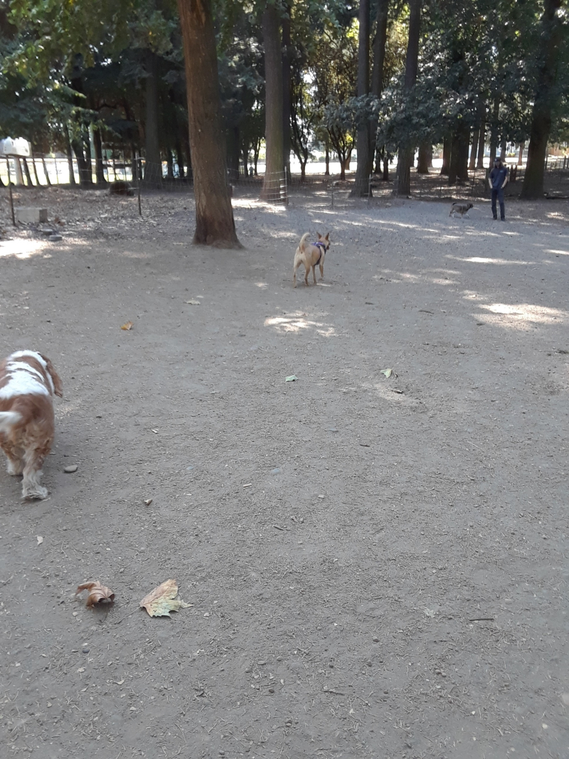 Gil chasing after Izzy
