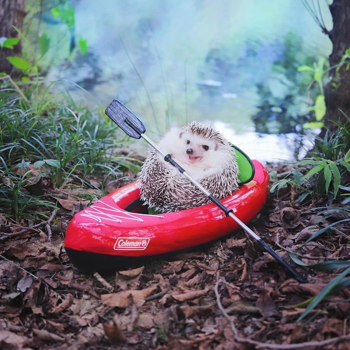 Hedgehog camping