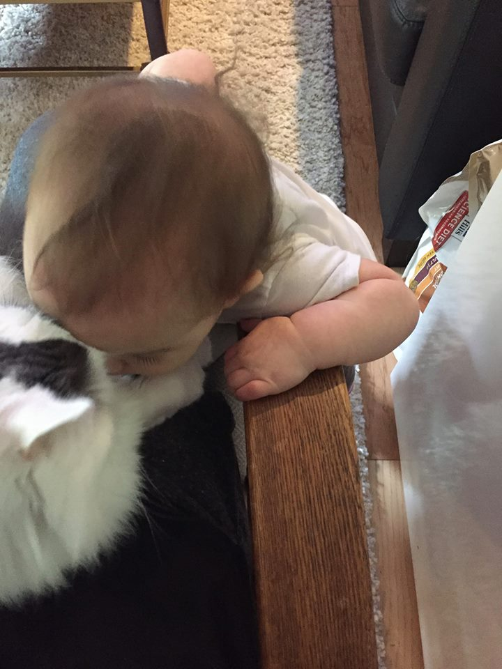 Rubbing noses