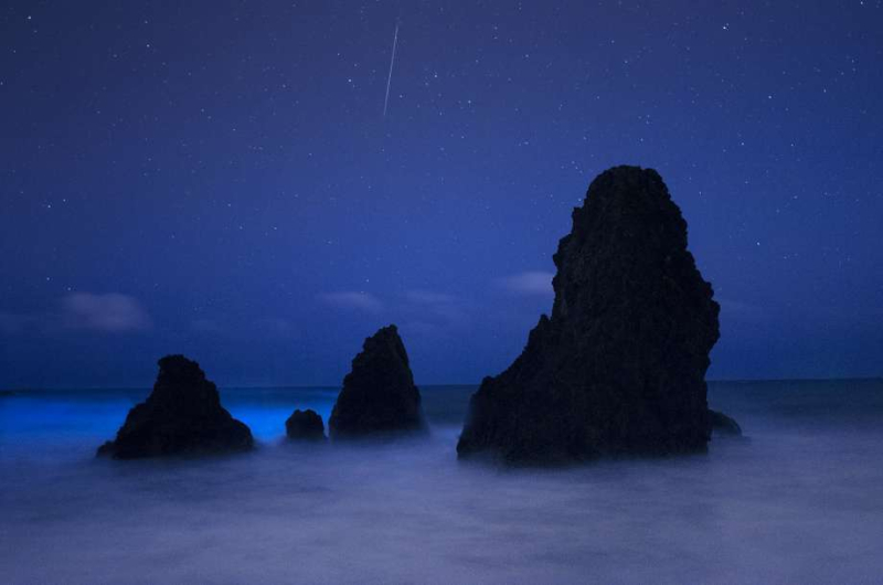 Bioluminescense and meteor