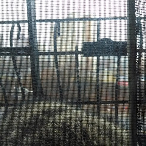 Racoon sleeping on fire escape in Jersey City