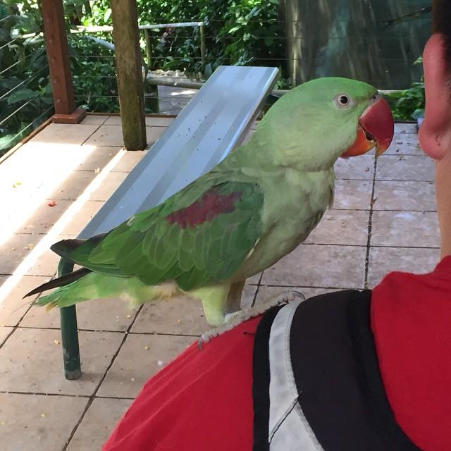 Parrot and Matt's shoulder